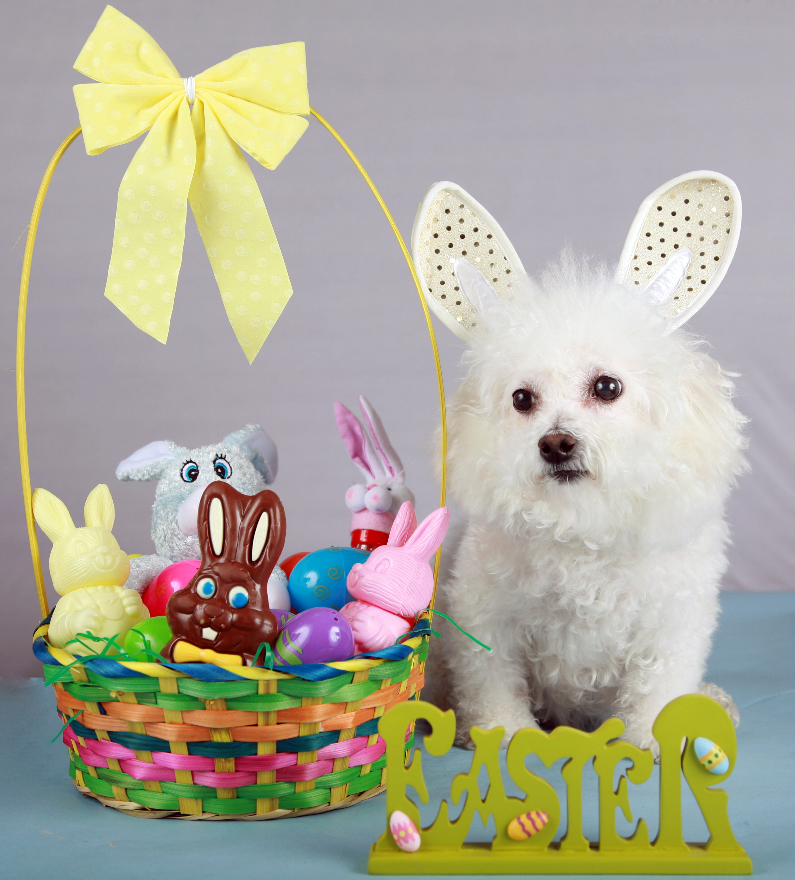 25 Dogs Who Are Posing For Their Easter Greeting Cards Dogtime