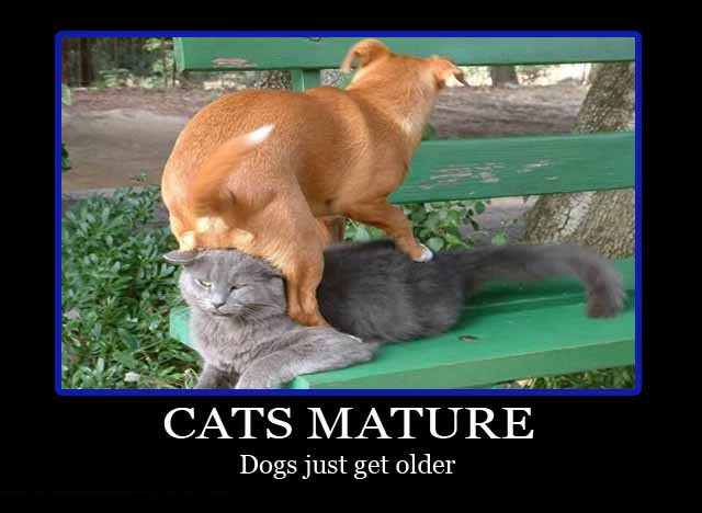 25 funny dog and cat demotivational signs - Dogtime American Water Spaniel Dogtime