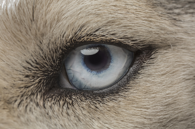 It is a myth dogs are colorblind; they actually see some colors, just not as many as humans.