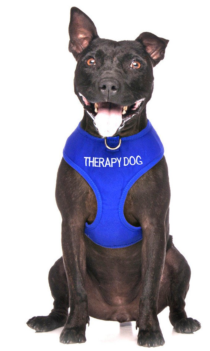 Therapy Dog Harness