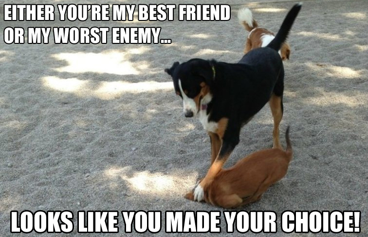 My Best Friend Funny Meme : Dog memes part the good sad and funny dogtime