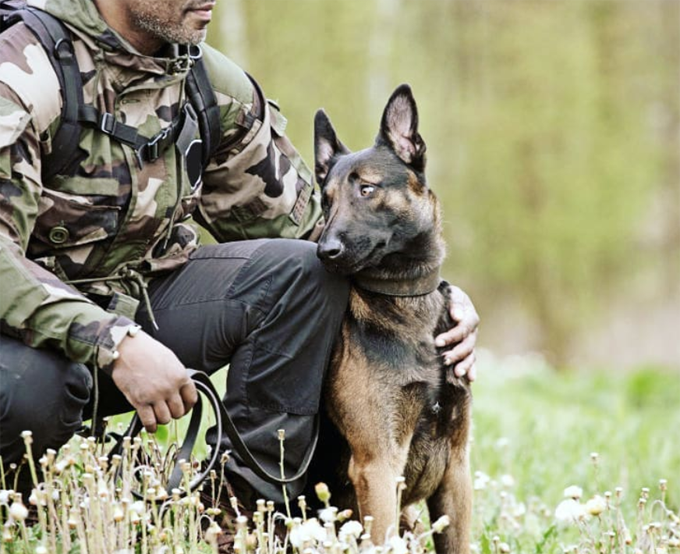 Military dogs are awesome!