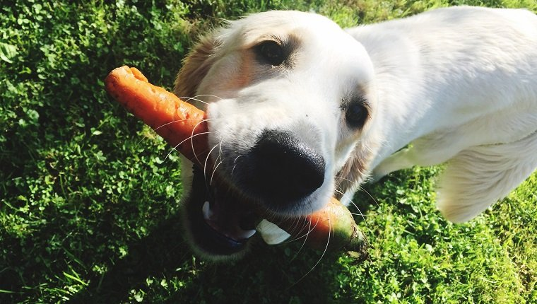Raw And Lightly Steamed Vegetables For Your Senior Dog