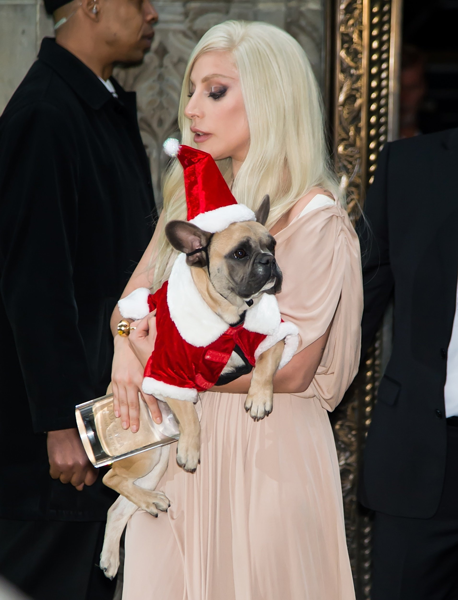 Lady Gaga Ready For Christmas With Her Dog, Stella