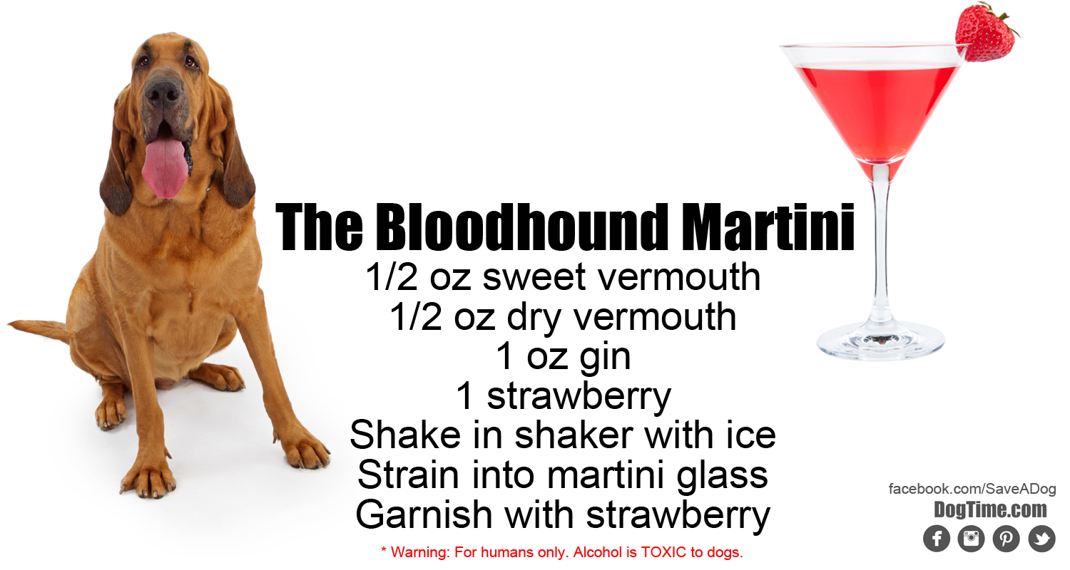 Bloodhound Martini Cocktail Recipe