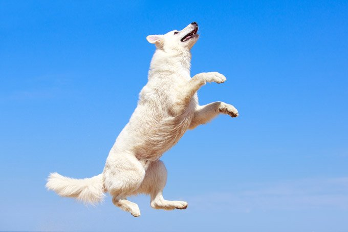 22 dogs jumping for joy dogtime