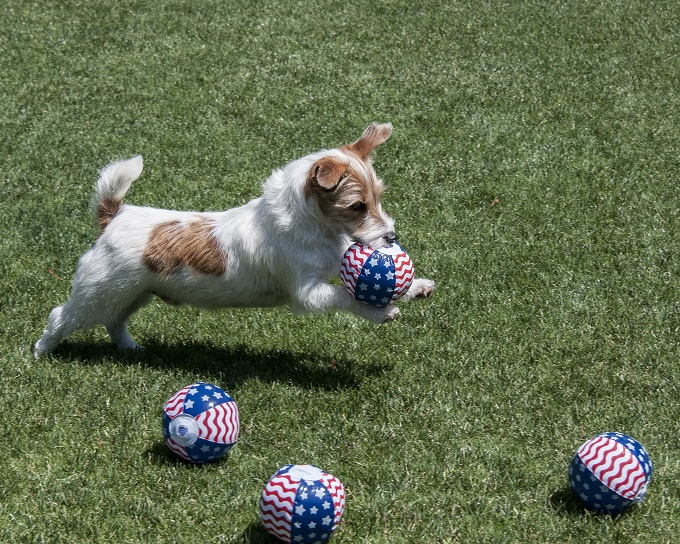 I love ball! And the USA!