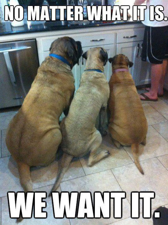 no matter what it is we want it funny dog memes 25 funny dog memes dogtime,Dog Funny Meme
