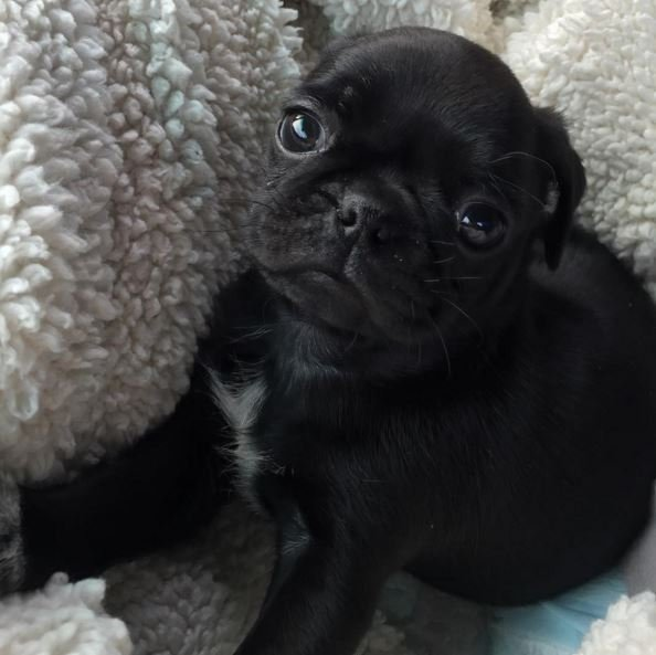 40 Adorably Cute Puppies Dogtime