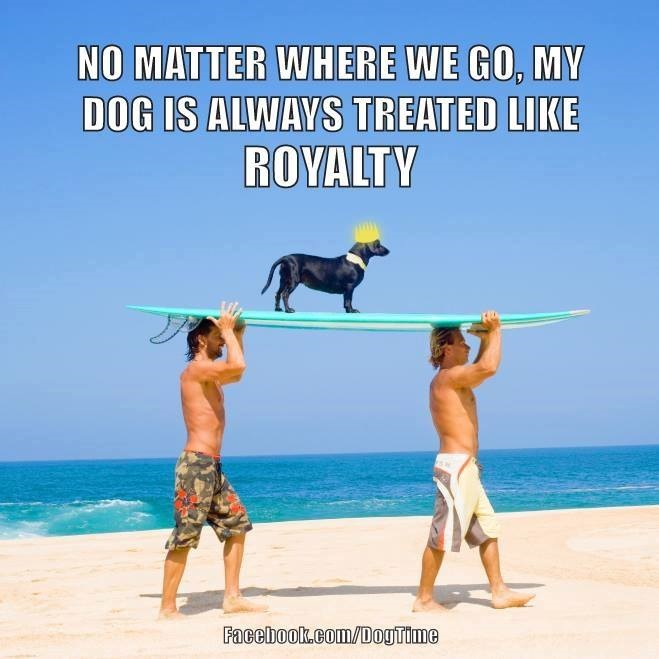 38 Funny Heartwarming Share Worthy Dog Memes GALLERY